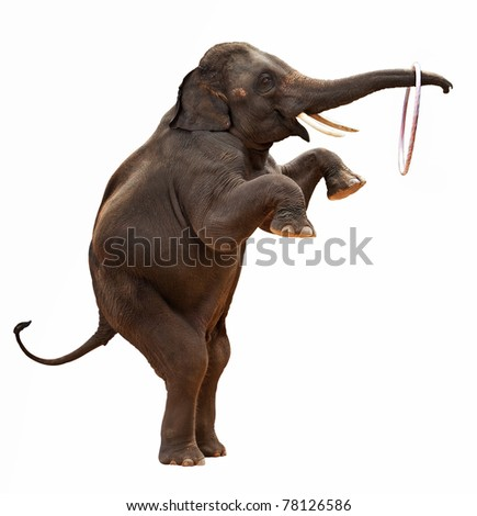 acrobatic Elephant isolated - stock photo