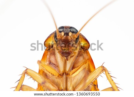 action image of Cockroaches, Cockroaches isolated on white background. High resolution cockroach images