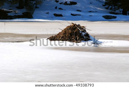 Active beaver lodge with breathing/exit hole