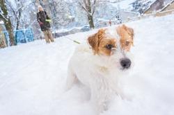 Active dog walking outside on snowy winter street
