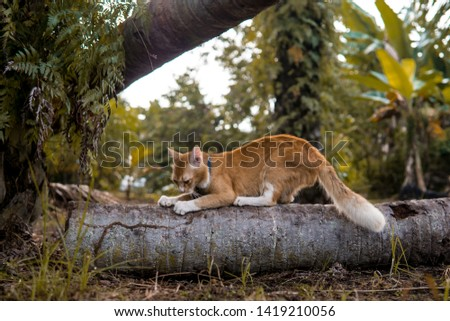 Activeorange cat, sometimes its wild, and another time its tame. Maybe because he born in the natural environment at the village. Stock foto ©
