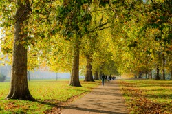 Active people by a tree lined path in Hyde Park in autumn