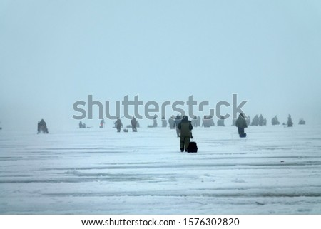 Active recreation on ice in winter. Crowd of fishermen catches large perch on fishing rod on lake Ladoga