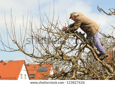 active senior standing in the treetop of an apple tree, cutting branches