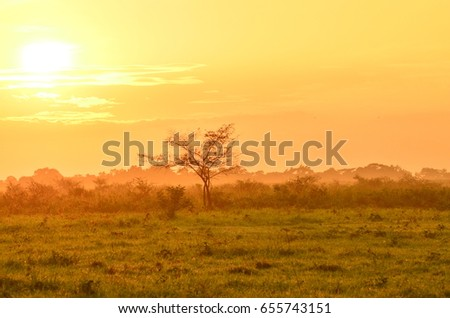 Activity in the Baluran National Park located in East Java, Indonesia.  Foto stock ©