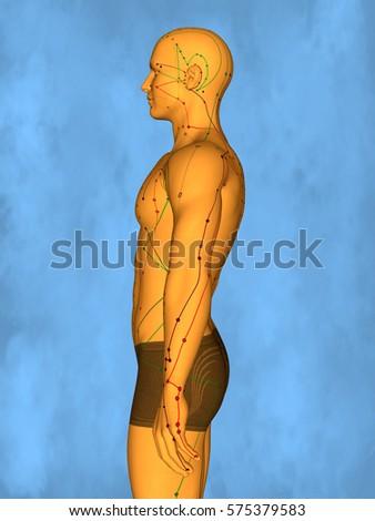 Acupuncture model M-POSE Mylie-01-4, 3D Model Zdjęcia stock ©