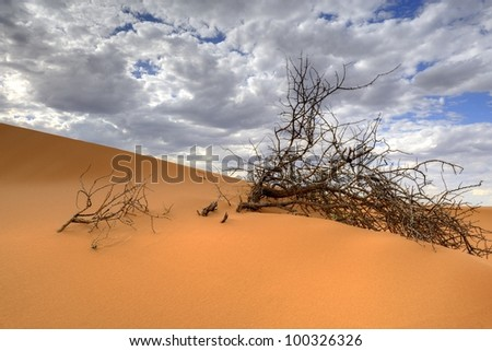 adaptive desert vegetation on a sand dune in the kalahari desert, askam, northern cape, south africa