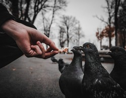 Adding food for birds in square