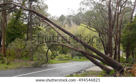 Adelaide Hills, Australia - October 4, 2016: Extreme weather conditions have caused a tree to fall on to power lines on Woorabinda Drive in Stirling, South Australia #494546821