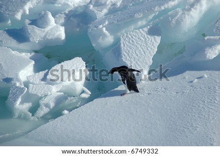 Adelie penguin wants to jump