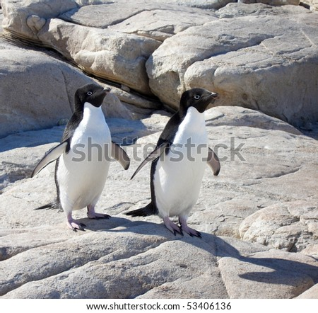 Adelie Penguins - stock photo