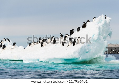 Adelie penguins colony on the iceberg Antarctica - stock photo