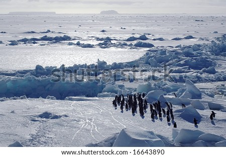 Adelie penguins in Antarctic scenery