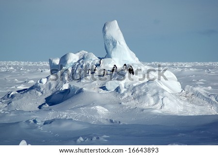 Adelie penguins on Antarctic pack ice