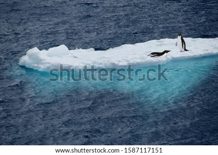 Adelie Penguins (Pygoscelis adeliae) on a sheet of ice, Antarctica