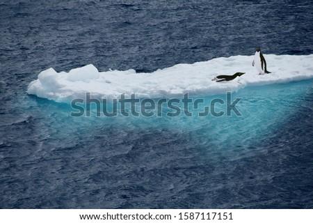 Adelie Penguins (Pygoscelis adeliae) on a sheet of ice, Antarctica