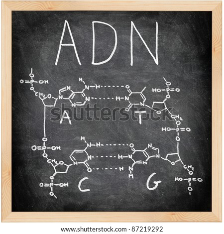 ADN, DNA in Spanish, French and Portuguese written on blackboard with chalk. Chemical structure of DNA including all four bases. Chalkboard science and education concept.
