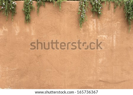 Adobe stucco-covered wall with the flowering vines hanging over it (somewhere in Arizona) -- design element/background