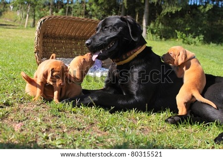 adoptive mother dog, Hungarian hound