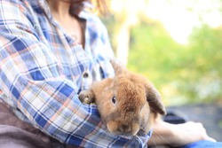 Adorable adult rabbit in woman's arm with care and love tenderly. Farmer holds bunny and friendship in nature.