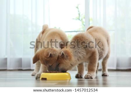 Adorable Akita Inu puppies eating food from bowl at home #1457012534