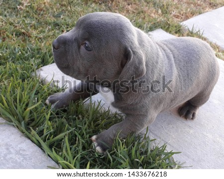 Adorable and friendly outdoor puppies #1433676218
