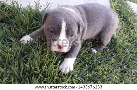 Adorable and friendly outdoor puppies #1433676233