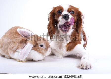Adorable animals love each other. Dog with lop rabbit posing together in studio. Real animal friends. Real friends.  #532498165