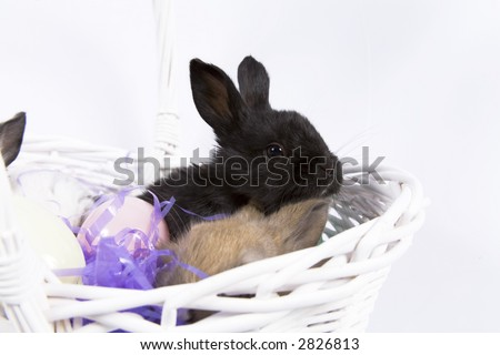 Adorable baby bunny rabbits in Easter basket