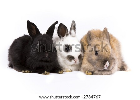 Adorable baby bunny rabbits on white background