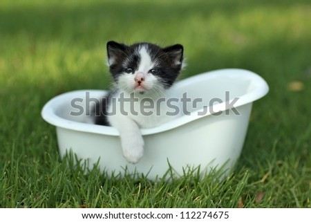 Adorable Baby Kitten Outdoors in Grass