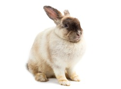 adorable baby rabbit on white background