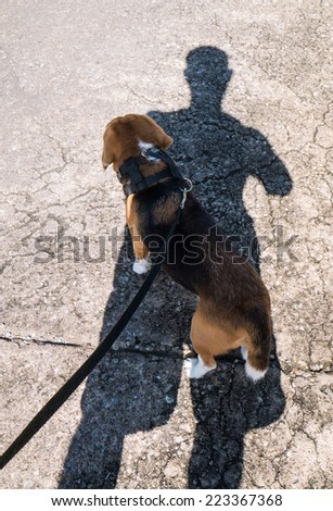 Adorable beagle dog resting under shadow of its owner