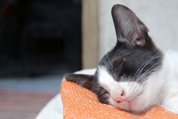 Adorable black and white kitten sleep and his right cheek attached to an orange-white plastic sack.