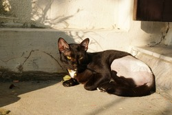 adorable black cat sunbathing and looking something, rest and relax from abdominal and hip wound after sterilization and treatment from broken leg with stitches.
