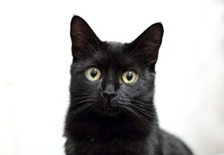adorable black cat with intense look