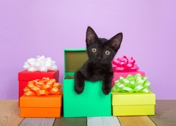 Adorable black kitten peaking out of a colorful birthday present surrounded by boxes with bows on an antique slated wood floor, multi colored and textured. Purple background with copy space.