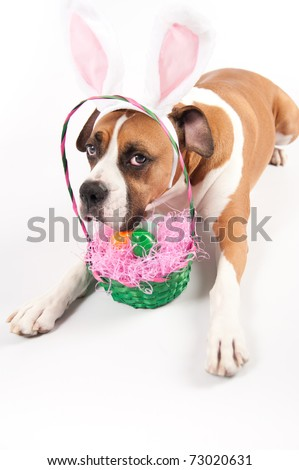 Adorable Boxer Dog with Funny Bunny Ears and Easter Basket of Eggs