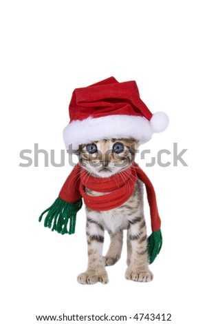 Adorable brown Christmas kitten in Santa stocking hat and scarf isolated on white
