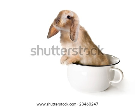 Adorable brown easter bunny in a toilet pot or potty