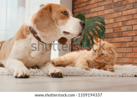 Adorable cat and dog lying on rug at home. Animal friendship