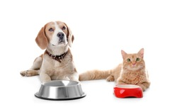 Adorable cat and dog near bowls on white background. Animal friendship