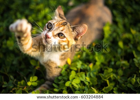 adorable cat is playing in the yard