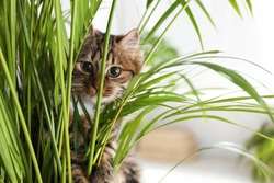 Adorable cat near houseplant on floor at home