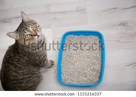 Adorable cat near litter tray indoors. Pet care Сток-фото ©