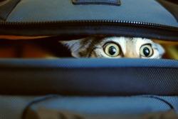 Adorable cat peeking out of bag.