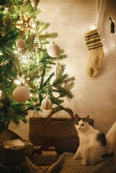 Adorable cat sitting under stylish Christmas tree with white baubles, boho ornaments and golden lights in atmospheric evening room. Pet in festive scandinavian room at eve. Merry Christmas!