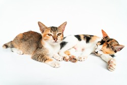 Adorable Cats in White Background