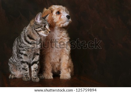 Adorable cavapoo puppy with Tabby kitten.