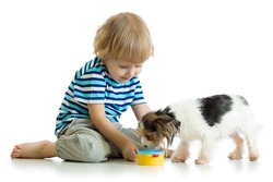 adorable child boy feeding his dog puppy, isolated on white